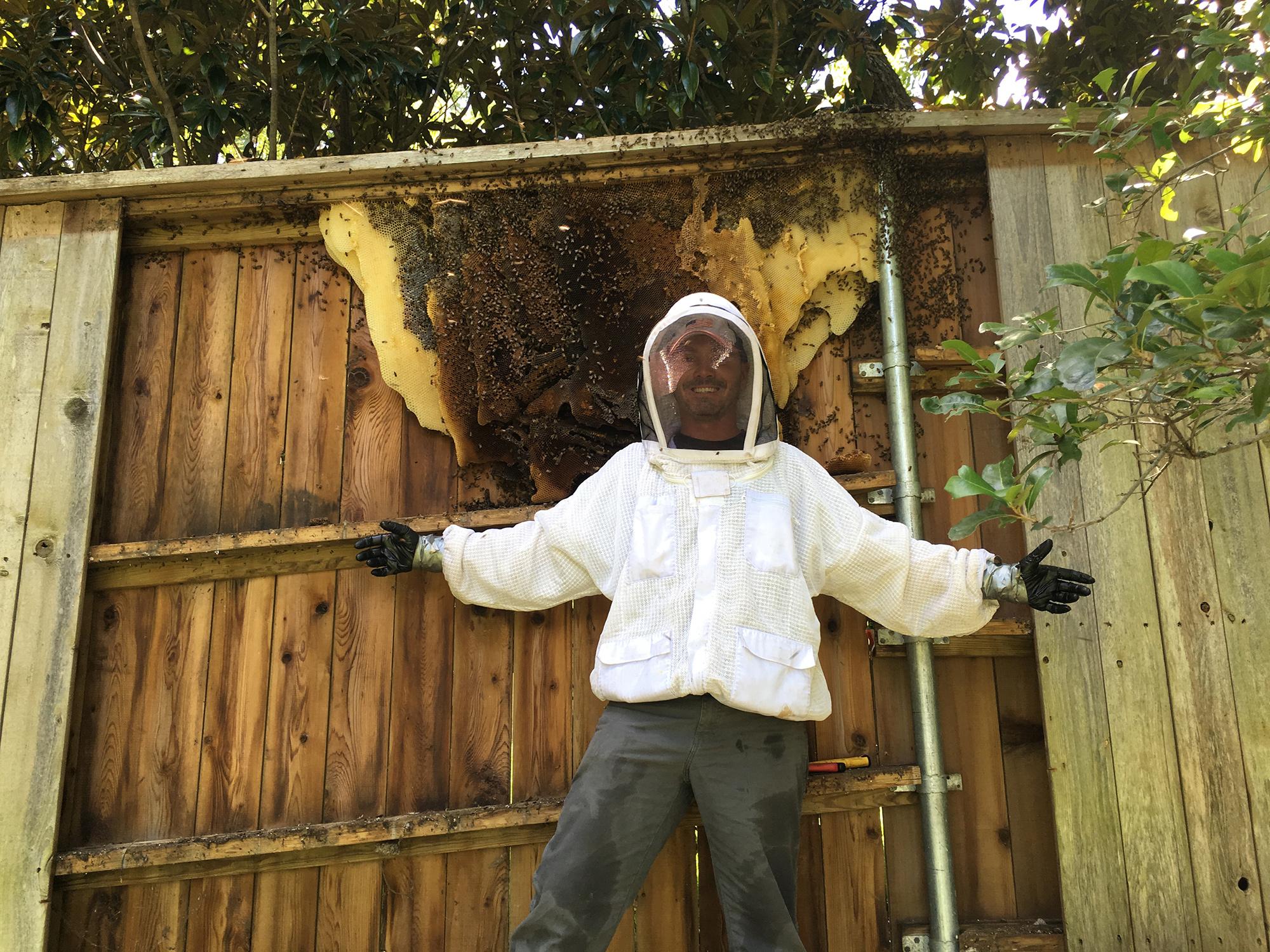 Live Honey Bee Removals – JC's Honey Bees
